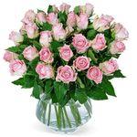 35 roséfarbene Rosen für 22,98€