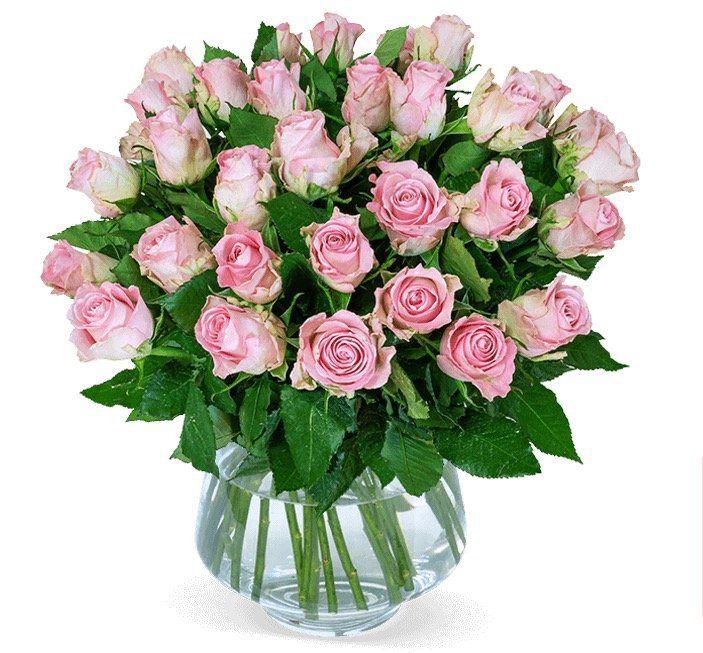 28 roséfarbene Rosen für 24,98€