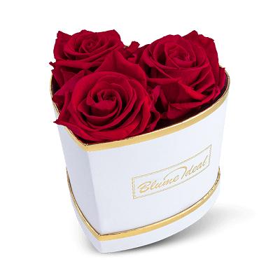 Infinity Rosenboxen mit 3 Ewigen Rosen für 31,48€