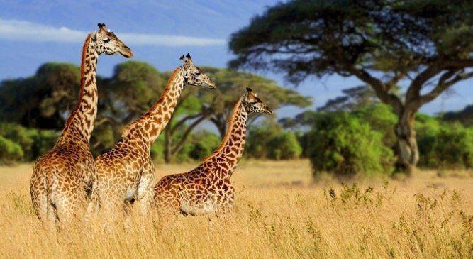 Tagesticket Safariland Stukenbrock für 19,90€ (statt 33€)