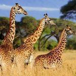 Tagesticket Safariland Stukenbrock (Saison 2020!) für 16,90€ (statt 33€)