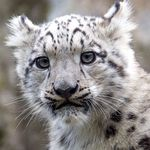Kölner Zoo Tagesticket und Aquarium inkl. 3 Postkarten für 8,72€ (statt 19,50€)