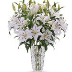 20 weiße Lilien mit XXL Blüten für 23,98€ + gratis Vase