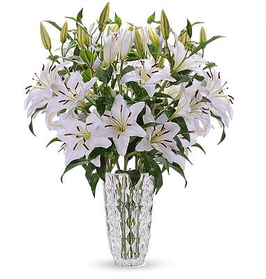24 weiße Lilien mit XXL Blüten für 24,98€