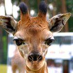 Serengeti Tier & Erlebnispark Lüneburger Heide + 2 Nächte 4* Hotel mit HP ab 99€ p.P.