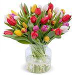 50 bunte Tulpen – frischer Frühlingsstrauß für 24,98€