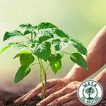 Baum pflanzen lassen mit dem Kauf von Wasa Knäckebrot