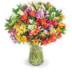 41 Inkalilien (bis zu 400 Blüten) für 24,98€ inkl. Zustellung