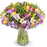 40 bunte Freesien mit bis zu 200 Blüten für 22,98€ – netter Gruß in schweren Zeiten
