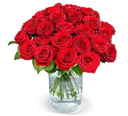 30 Red Naomi Rosen mit XXL Blütenkopf (80 Blütenblätter pro Stiel) für 29,98€