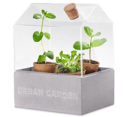 Tchibo Mini Gewächshaus für Kräuter oder kleine Pflanzen für 14,30€ (statt 19€)