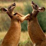 "3sat: Doku ""Australiens Nationalparks"" kostenlos als Stream (IMDb 7,3/10)"