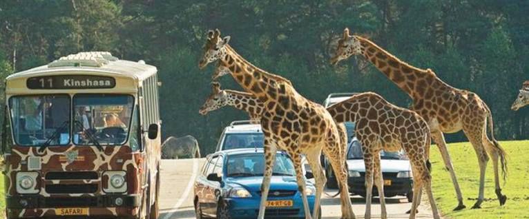 2 ÜN in NL inkl. Eintritt in Safaripark Beekse Bergen, Frühstück & Fitness ab 109€ p.P.
