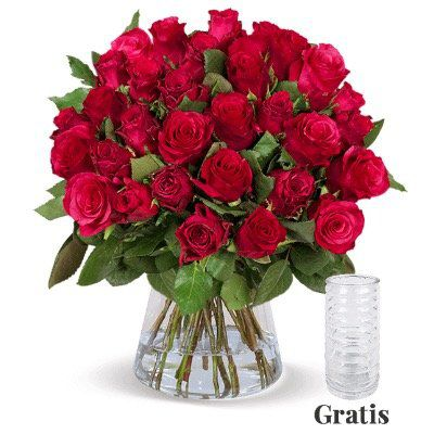 25 Rote Rosen in 50cm Länge nur 24,98€ + Vase geschenkt