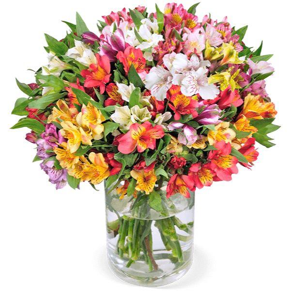 40 Inkalilien (bis zu 400 Blüten) für 28,98€ inkl. Zustellung