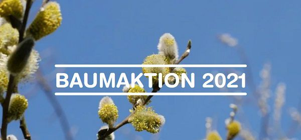 Blume2000: Weidenbaumsetzling kostenlos abholen