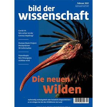 Bild der Wissenschaft Jahresabo für 127,40€ + 115€ Amazon Gutscheinaus spiegel