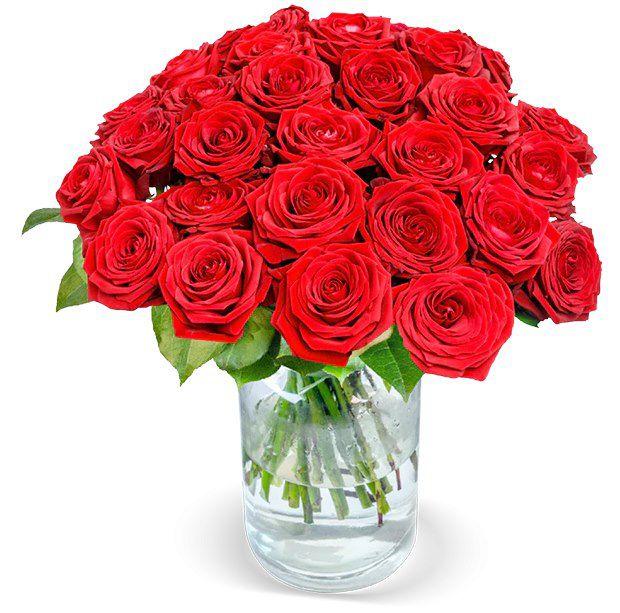 BlumeIdeal: 24 Red Naomi Rosen mit XXL-Blumenköpfen für 25,98€