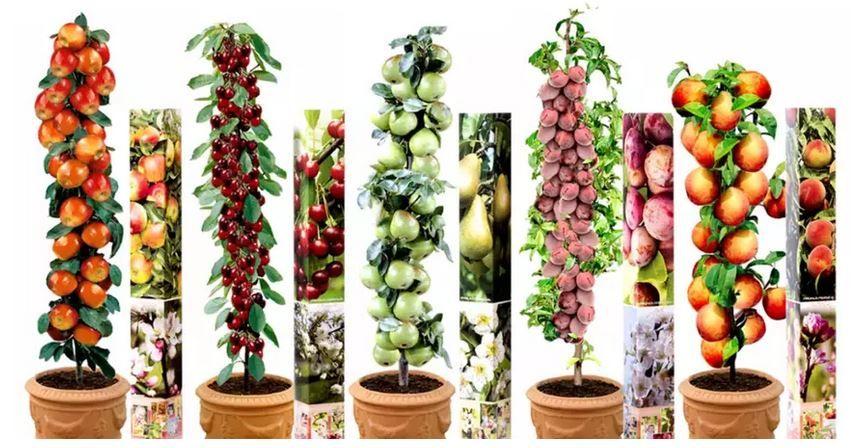Obstbäume im 5er oder 10er Set ab 31,98€ (statt 45€)