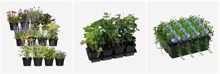 Pflanzen Rabatt Aktion bei Toom mit 20% Rabatt   z.B. Hecken, Kräutersets und mehr