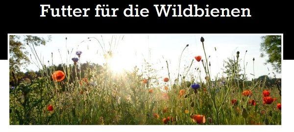 Gratis: Wildblumensaatgut