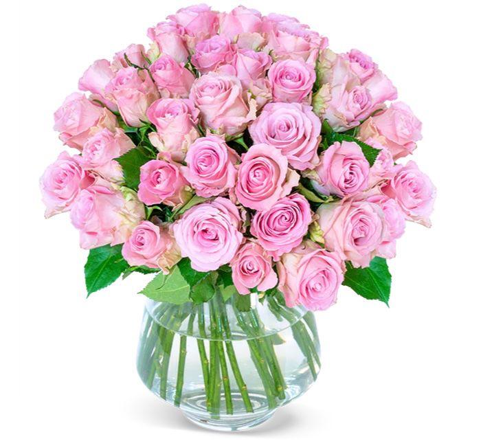 41 Rosen PinkDiamonds für 25,98€