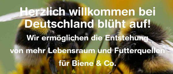 Kostenlos: Blühwiesen Saatgut