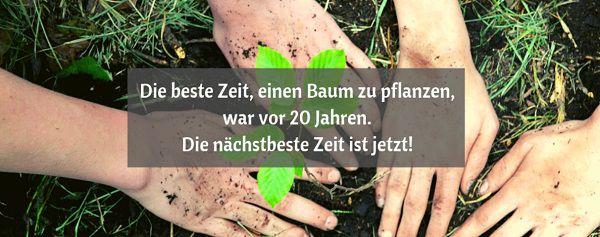 Kostenlos: Mit Woodola einen Baum pflanzen lassen