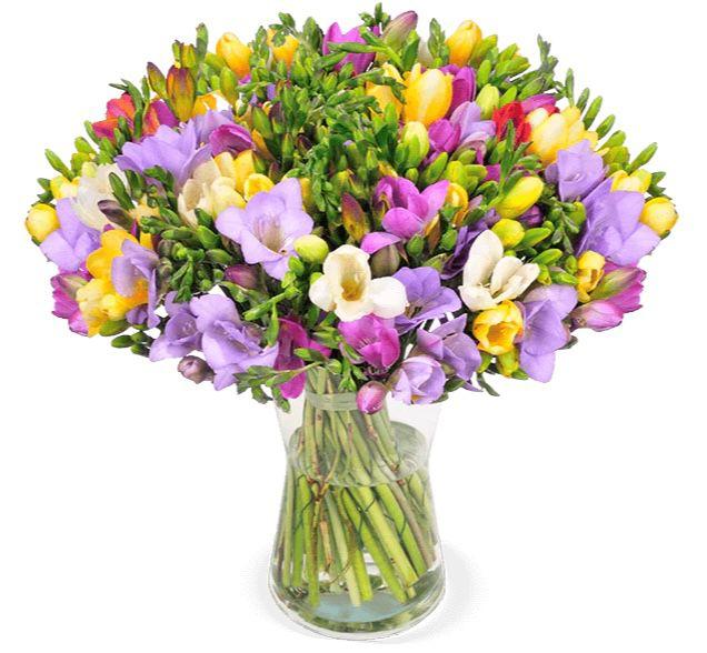 50 bunte Freesien mit bis zu 300 Blüten für 25,98€