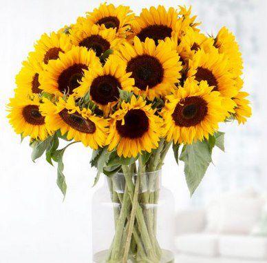 20 Sonnenblumen inkl. Grußkarte & 7-Tage-Frische-Garantie für 26,90€ (statt 40€)
