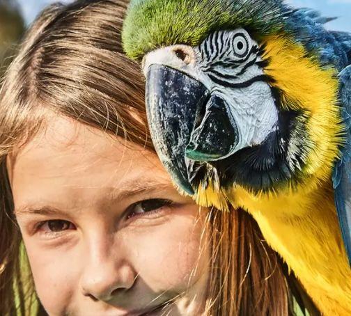 Tagesticket Weltvogelpark Walsrode für 17€(statt 24€) – Kinder bis 3 Jahren kostenloser Eintritt