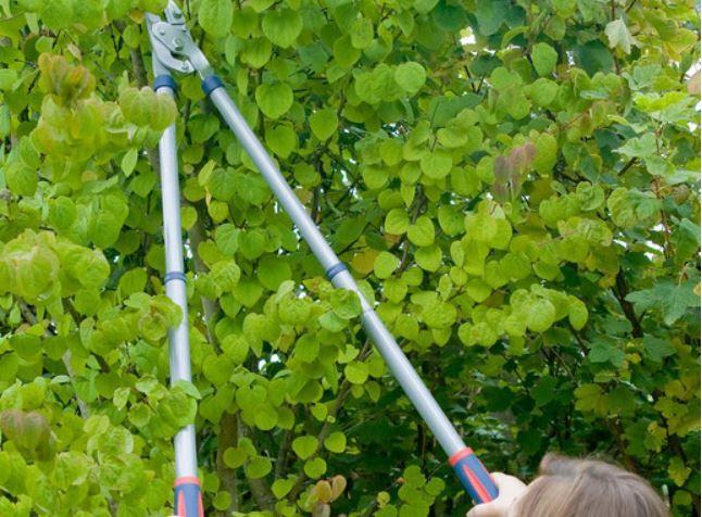 Spear & Jackson 3teiliges Gartenscheren Set für 35,90€ (statt 81€)