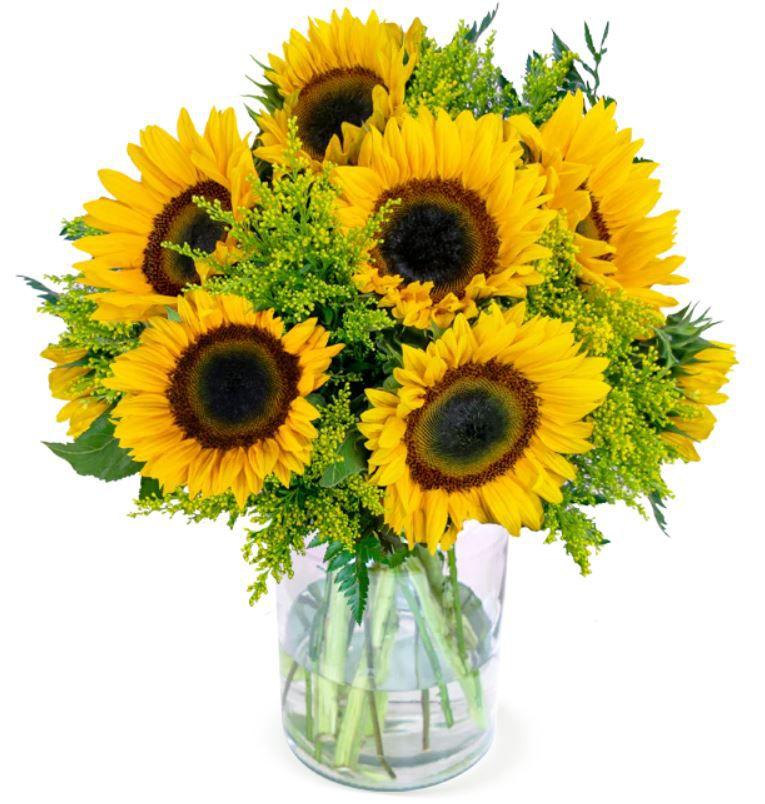 Herbst Liebe XXL Blumenstrauß mit 20 Sonnenblumen & Solidago für 25,98€