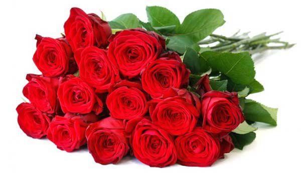 20 rote rosen im strau f r 18 80. Black Bedroom Furniture Sets. Home Design Ideas