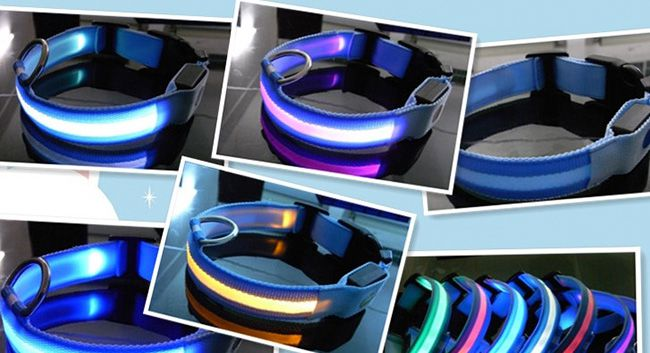 led hundehalsband aus nylon ab 1 83 china gadget. Black Bedroom Furniture Sets. Home Design Ideas
